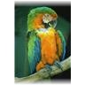 bird_macaw2_frosted.JPG